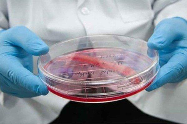 فراوری و صادرات 400 محصول در حوزه سلول بنیادی