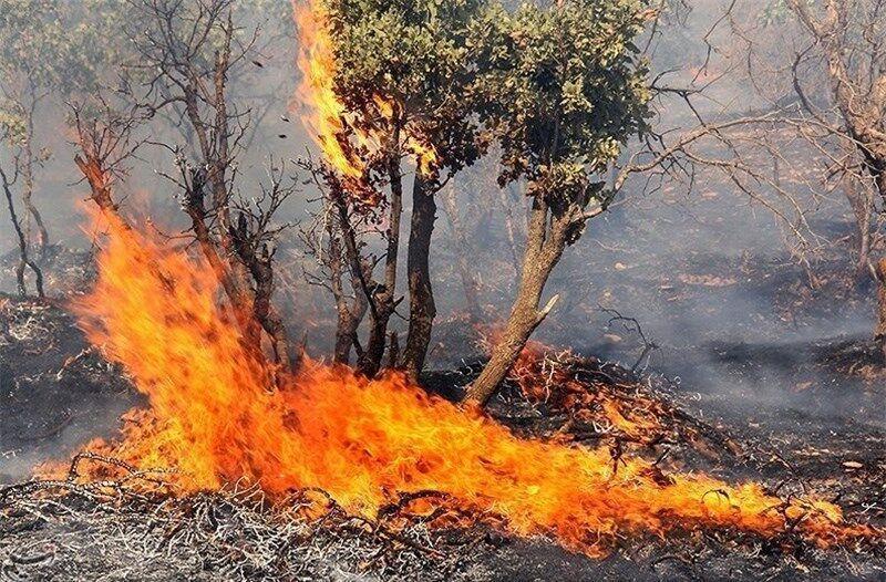 خبرنگاران 29 درصد عرصه های طبیعی خراسان شمالی در محدوده پرخطر آتش سوزی